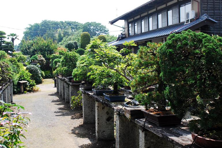 夏の彩霞園