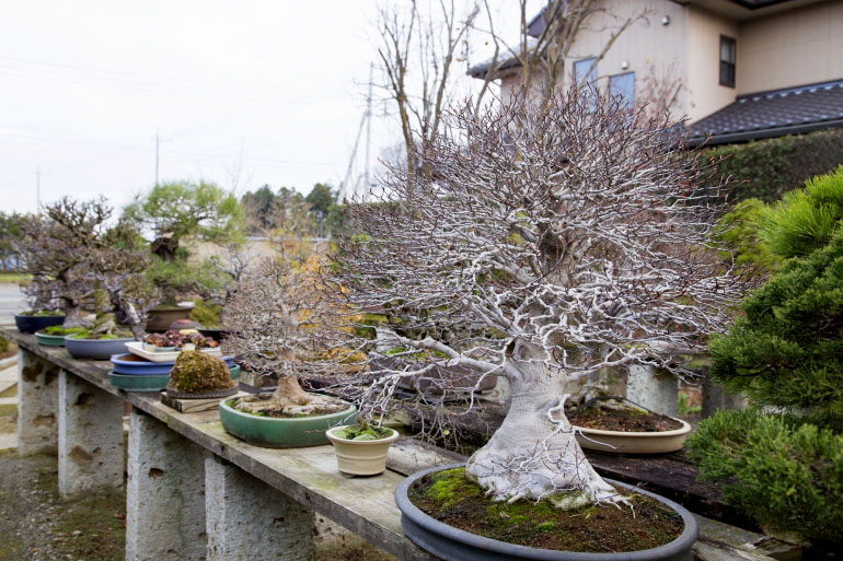 冬の彩霞園